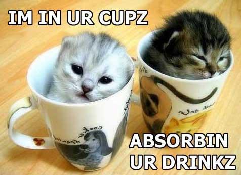 kittens-absorbin